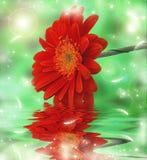 Gerber rosso Fotografia Stock Libera da Diritti