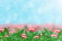 Gerber und Blätter lizenzfreies stockfoto