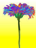 Gerber. Vector illustration. Beautiful flower design Royalty Free Stock Images