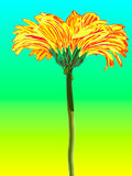 Gerber. Vector illustration. Beautiful flower design Royalty Free Stock Photos