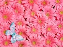 gerbera λουλουδιών ανασκόπησ& Στοκ εικόνα με δικαίωμα ελεύθερης χρήσης