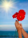 gerbera λουλουδιών μαργαριτών Στοκ φωτογραφία με δικαίωμα ελεύθερης χρήσης