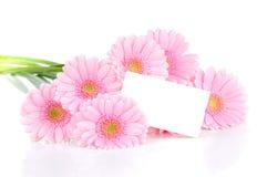 gerbera λουλουδιών καρτών Στοκ φωτογραφία με δικαίωμα ελεύθερης χρήσης