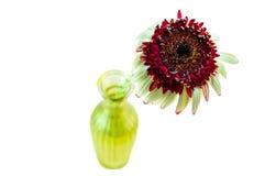Gerbera λουλουδιών upgrowth σε μια απομονωμένη άποψης βάζων άνωθεν εικόνα στοκ φωτογραφίες