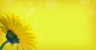 Gerbera στην κίτρινη ανασκόπηση Στοκ φωτογραφία με δικαίωμα ελεύθερης χρήσης