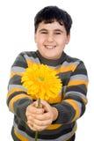 gerbera маргаритки мальчика счастливый Стоковая Фотография
