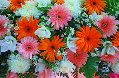 Gerbera цветков включенные и предпосылка хризантемы Стоковые Фото
