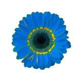 عالم الألوان gerbera-12-4580571.j