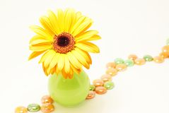 Gerbera. Green flower vase with orange gerbera Royalty Free Stock Images