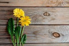 Цветок и листья Gerbera желтые украшают на коричневой деревянной предпосылке - весна космоса экземпляра взгляда сверху и настроен стоковая фотография