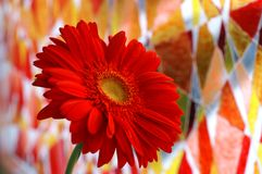 Gerbera. Red gerbera flower against a colorful painted window Royalty Free Stock Photography