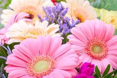 Gerbera. Pink flower bouquet background Stock Photography