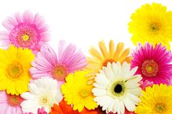 Gerbera. Bouquet of colorful gerbera flowers Stock Photography