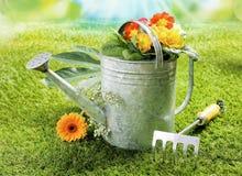 Το πότισμα μπορεί με τα θερινά λουλούδια Στοκ Εικόνα