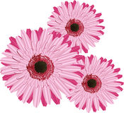Gerbera. This image is a vector illustration and can be scaled to any size without loss of resolution. This image will download as a .eps file. You will need a Stock Photos