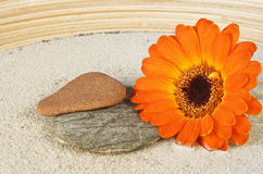 Gerbera. Blossom on sand with stones Stock Photo