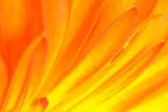Gerbera abstract detail - abstractie van zonstralen Stock Afbeelding