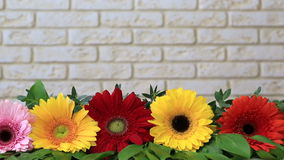Gerbera against a brick wall.