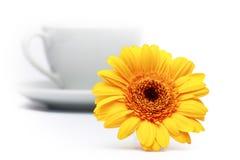 Gerbera amarelo Imagens de Stock Royalty Free