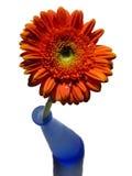 Gerbera anaranjado y florero azul foto de archivo