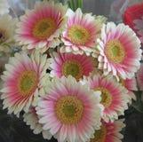 Gerbera atrativo brilhante bonito Daisy Flowers Bouquet do rosa & o branco fotografia de stock royalty free