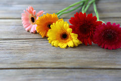 Gerbera beautiful flowers on the boards Royalty Free Stock Image