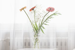 Gerbera beautiful flowers on a white background. Royalty Free Stock Photography