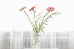 Gerbera beautiful flowers on a white background. Stock Images