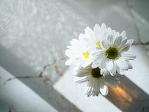 Gerbera bianca in vaso di vetro Immagini Stock Libere da Diritti