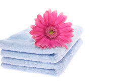 Gerbera on Blue Towel Stock Image