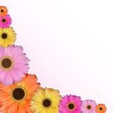 Gerbera-Blumen-natürlicher Hintergrund-Vektor-Illustration Stockfotos