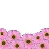Gerbera-Blumen-natürlicher Hintergrund-Vektor-Illustration Lizenzfreie Stockfotos