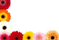 Gerbera border Royalty Free Stock Image