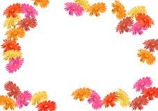Gerbera border. Gerbera (Barberton daisy) border Royalty Free Stock Image
