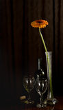 Gerbera and bottle of Wine Stock Image