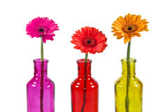 Gerbera In Bottles Royalty Free Stock Photo