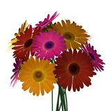 Gerbera bouquet Stock Photography
