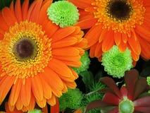 Gerbera bouquet stock image
