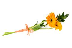 Gerbera Bouquet - 3. Bouquet of orange gerberas on a white background (3 Royalty Free Stock Images
