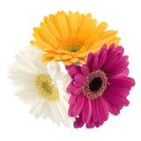 Gerbera Bouquet Stock Images