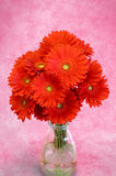 Gerbera bouquet Stock Image