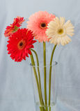 Gerbera bouquet Royalty Free Stock Photography