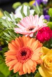 Gerbera in a Bouquet royalty free stock photography