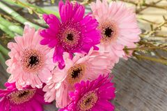 Gerbera and branches. Bouquet with pink gerbera and twigs on a wooden background Stock Image