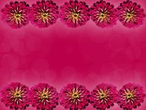 Gerbera bright pink color Stock Photography