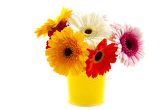 Gerbera bucket Stock Image