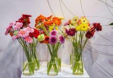 Gerbera, bunte Blumen des Schnittes stockfoto