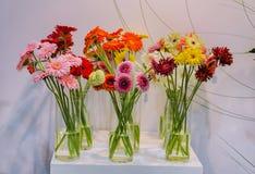 Gerbera, bunte Blumen des Schnittes stockbild