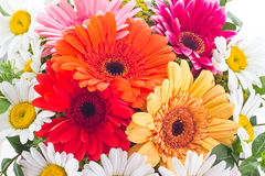Gerbera and camomile flowers in bouquet Stock Image