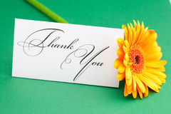 Gerbera and card signed thank you Stock Photography